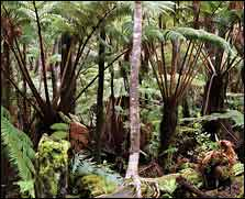 Hawaiin tropical forest
